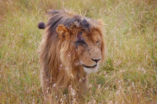 lion-king-real-life-scar